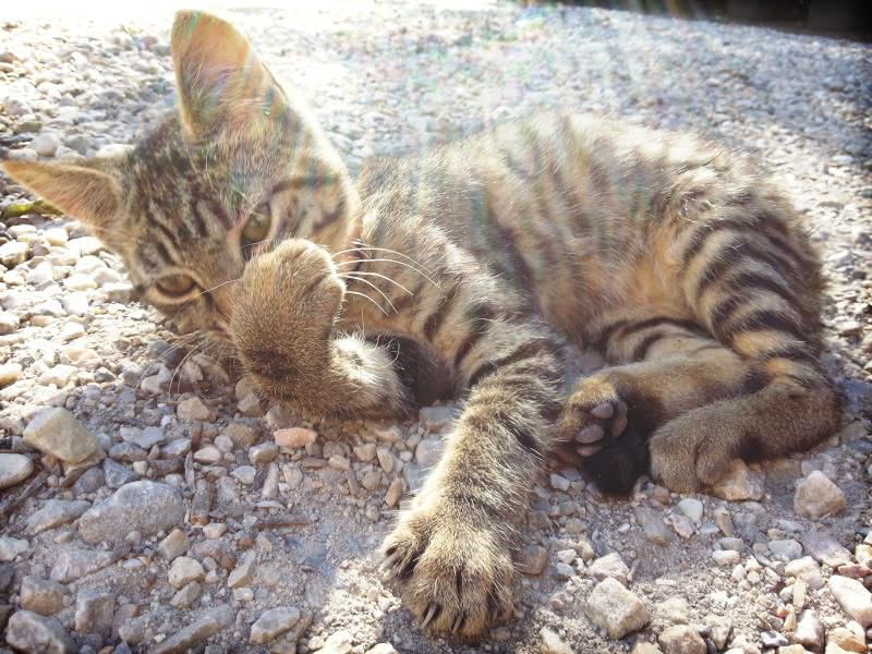 Photo de chaton mignon